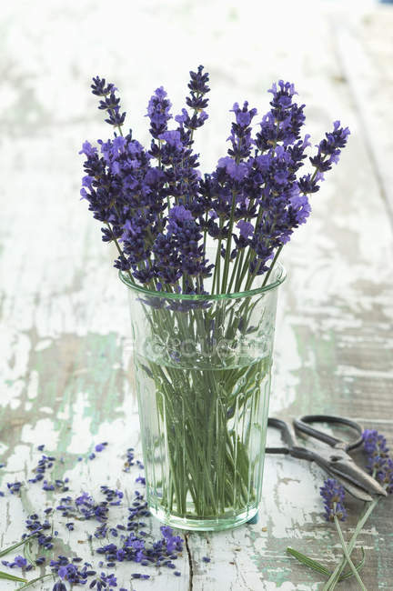 Bunch of fresh lavender in glass — Stock Photo
