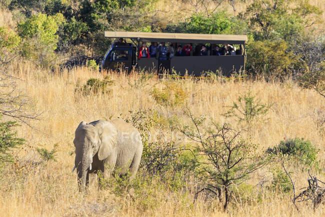 Южная Африка, северо-запад, Боджанала платины, Африканский слон, смотрел на тур группы в заповедник Пиланесберг игра — стоковое фото