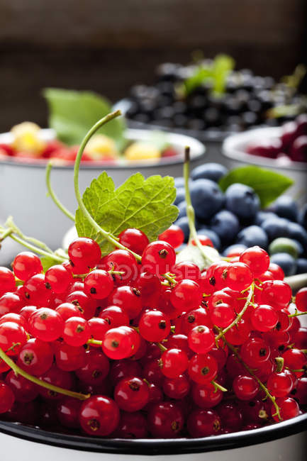 Bowl of red currants and bowls of other berries in the background — Stock Photo