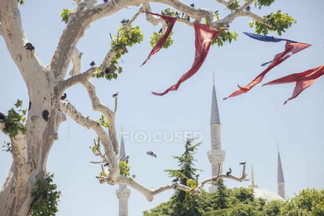 Туреччина, Стамбул, подання до мінаретів Голубої мечеті з турецького прапорами висить на дереві, на передньому плані — стокове фото
