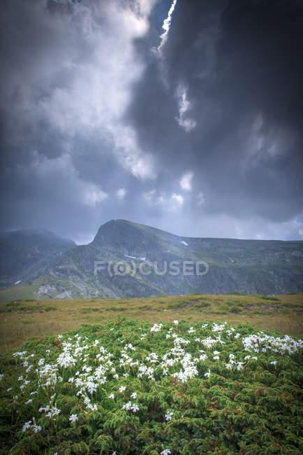 Болгария, Рильский хребет, пейзажи — стоковое фото