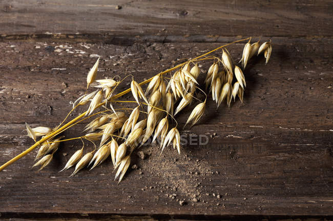 Ripe spike of oat on wooden background — Stock Photo