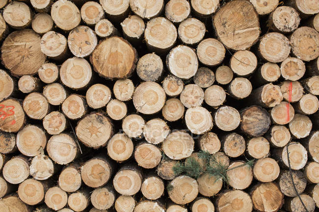 Pile of wooden logs stacked — Stock Photo