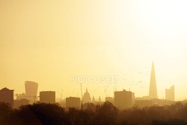 UK, London, flock of birds in front of skyline with The Shard in morning light — Stock Photo