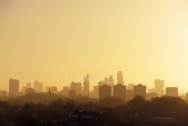 Flock of birds in front of skyline in morning light, London, UK — Stock Photo