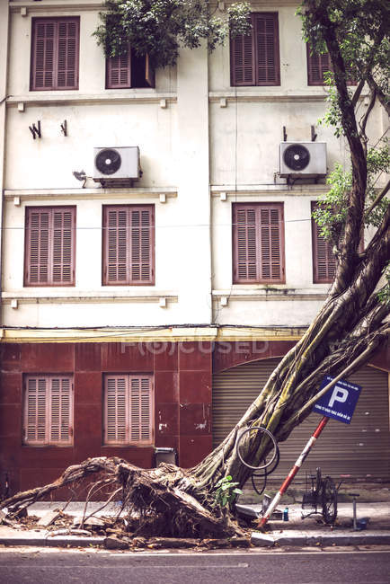 Vietnam, Hanoi, fallen tree on street after typhoon — Stock Photo
