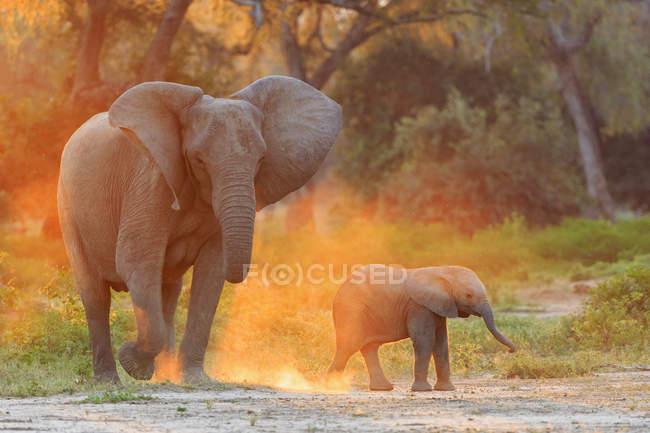 Африка, Зимбабве, Национальный парк