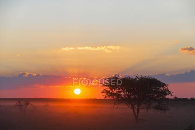 Namibie, parc national d'Etosha, coucher de soleil sur le champ — Photo de stock