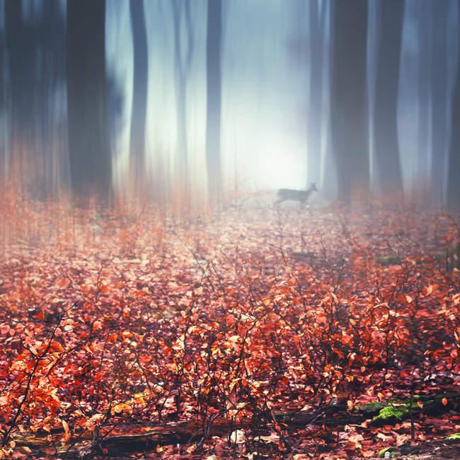 Туманный осенний лес, мокрые осенние листья и олени, цифровой манипулировать — стоковое фото