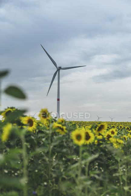 Sunflower field and wind farm under moody sky — Stock Photo