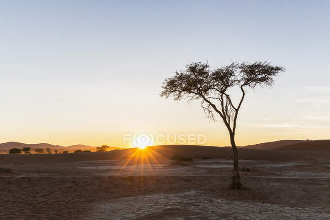 Africa, Namibia, Namib Desert, View to desert dunes and acacia at sunrise, Namib-Naukluft National Park — Stock Photo