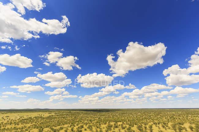 Namibia, Etosha National Park, view to steppe  during daytime — Stock Photo