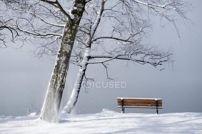 Germany, Bavaria, Lake Kochel, wooden bench on lakeshore, foggy and thaw — Stock Photo