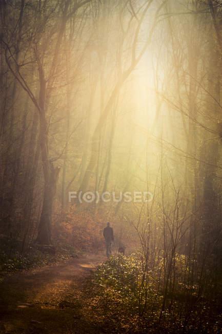 Прогулка с собакой в утреннем лесу — стоковое фото