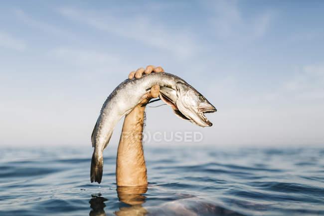 Immagine potata della holding dell'uomo preso pesce fuori dall'acqua — Foto stock