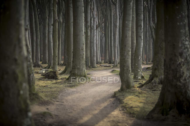 Allemagne, Nienhagen, piste forestière à Gespensterwald — Photo de stock
