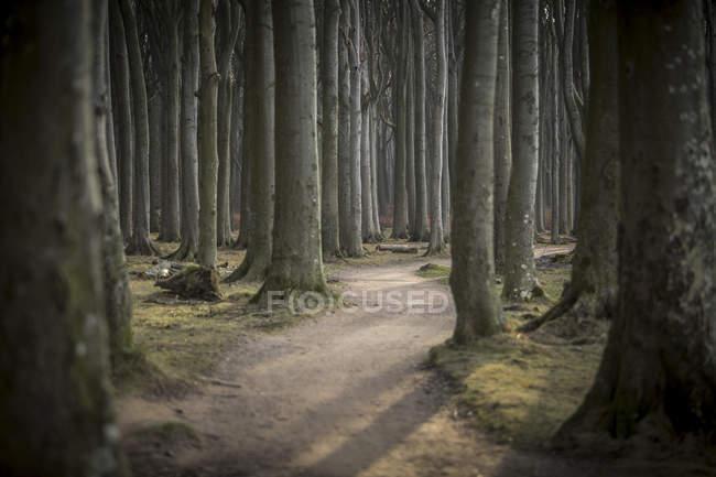 Germany, Nienhagen, forest track at Gespensterwald — Stock Photo