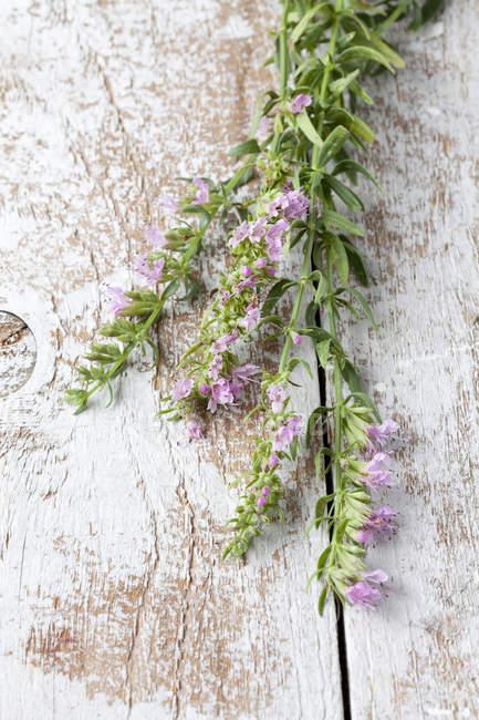 Hysope en fleurs sur une surface en bois — Photo de stock