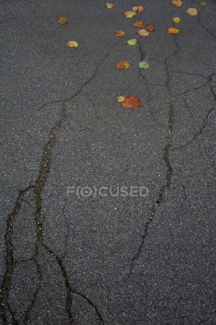 Some autumn leaves on a tarmac with cracks, top view — Stock Photo