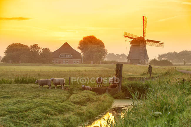 Netherlands, North Holland, windmill at sunset — Stock Photo