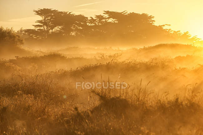 France, Brittany, Cote Sauvage at Qiberon peninsula in evening light — Stock Photo
