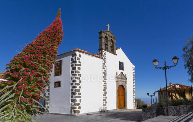 Espagne, Tenerife, îles Canaries, Vilaflor, Découvre à San Pedro, à la fleur d'Echium Wildpretii sur le premier plan — Photo de stock