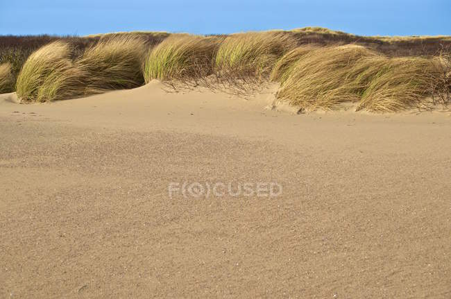 Netherlands, Goeree-Overflakkee, Grass sand dune — Fotografia de Stock
