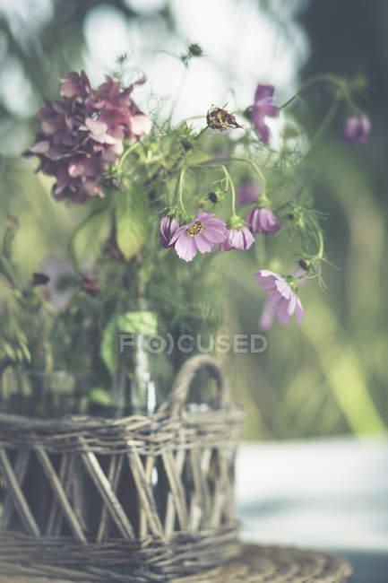 Violette Blüten der Kosmetik im Freien auf verschwommenem Hintergrund — Stockfoto