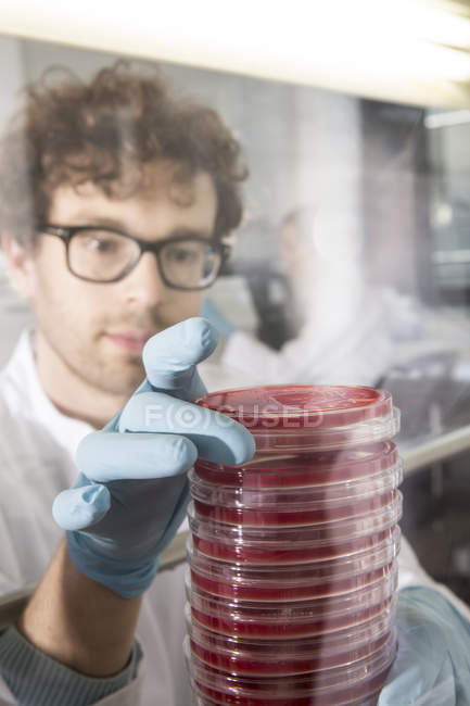 Scientist working in laboratory with bacteria cultures — Stock Photo