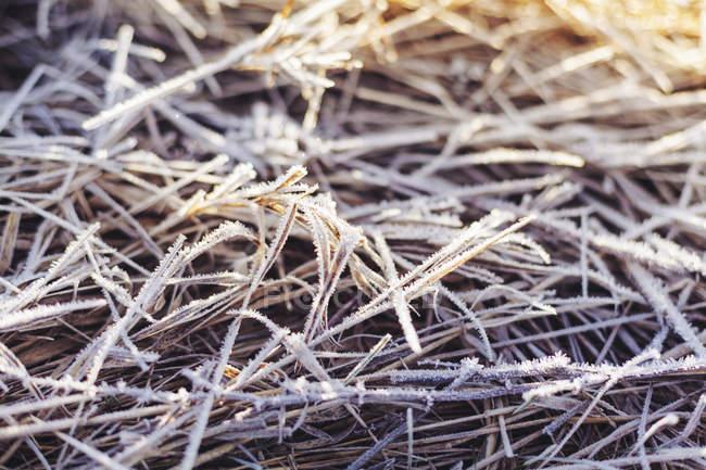 Hierba cubierta de escarcha, enmarcada - foto de stock
