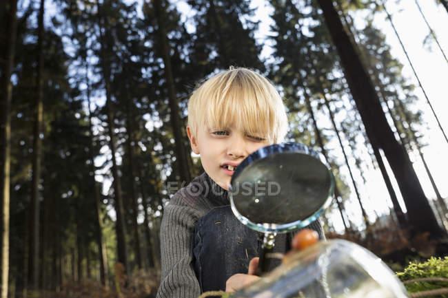 Маленький хлопчик дивляться равлик зі збільшувальним склом у лісі — стокове фото