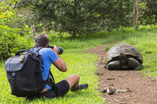 Rear view of man photographing Galapagos giant tortoise — Stock Photo