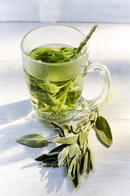 Vaso de té de salvia caliente y salvia fresca - foto de stock