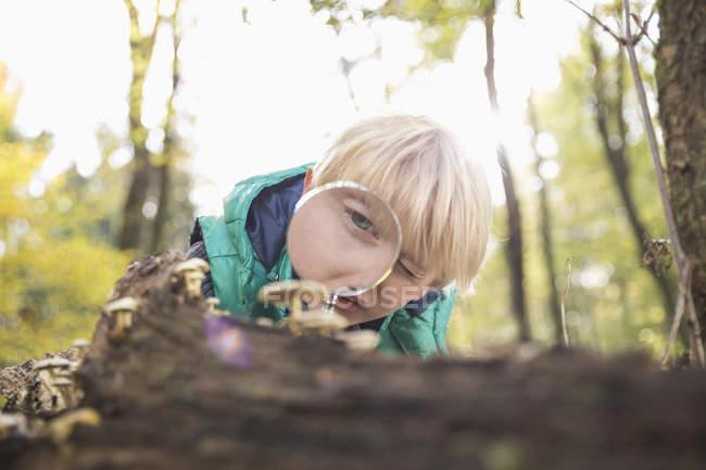 Мальчик смотрит на грибы с лупой в лесу — стоковое фото