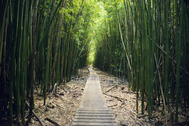 Stati Uniti d'America, Hawaii, Maui, Parco nazionale di Haleakala, foresta di bambù Pipiwai Trail — Foto stock