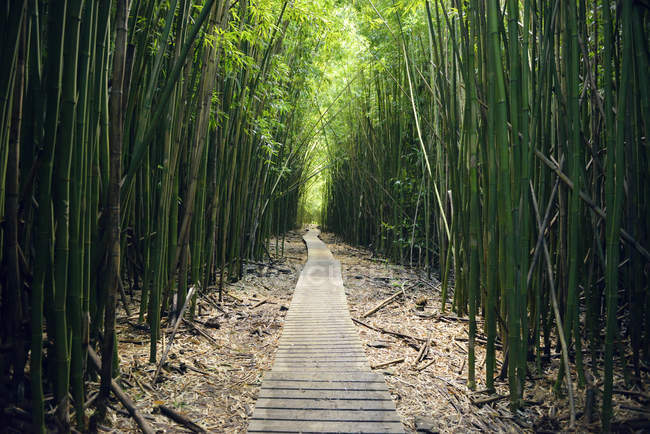 USA, Hawaii, Maui, Haleakala National Park, bamboo forest at Pipiwai Trail — Stock Photo