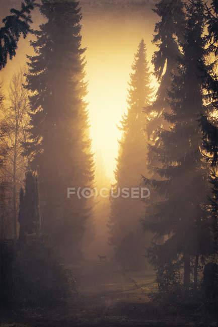 Cena com floresta, corça e árvores em contraluz — Fotografia de Stock