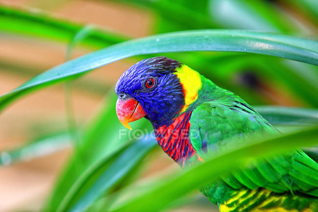 Malaysia, Pahang, Taman Negara National Park, colorful bird perching on tree — Stock Photo