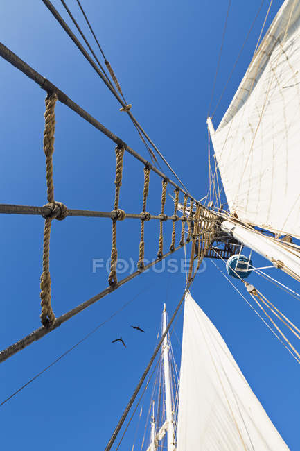 Rigging with rope ladder of a sailing ship — Stock Photo