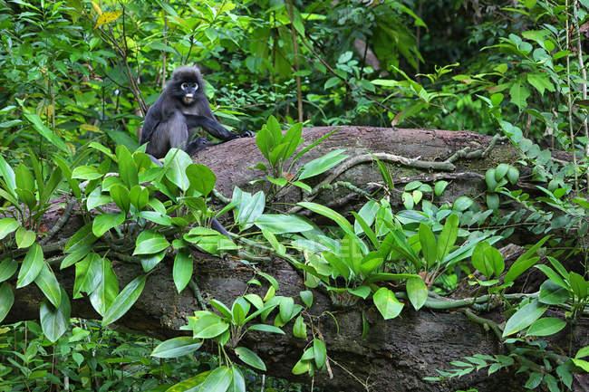 Mono de hoja oscura en árbol rodeado de plantas - foto de stock
