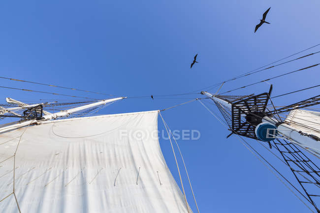 Rigging with sail of sailing ship and flying birds — Stock Photo