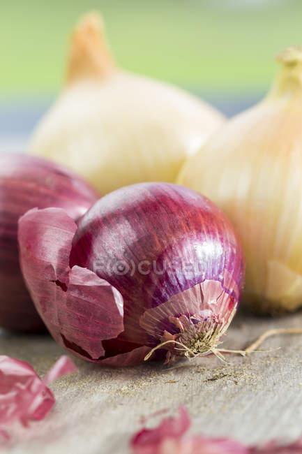 Cebola vermelha e branca — Fotografia de Stock
