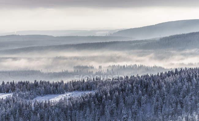 Німеччини, Саксонії-Ангальт, регіоні Harz національного парку, хвойних лісів та подих туману взимку — стокове фото