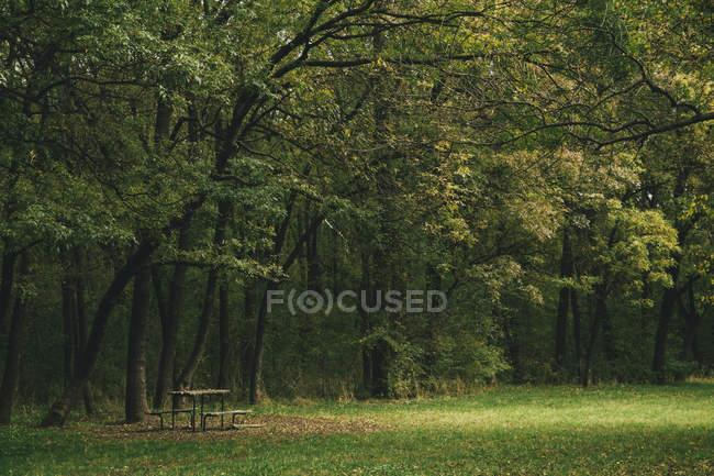 Ansicht von Bank und Tisch gedeckt mit Herbstlaub im West Park, Sofia, Bulgarien — Stockfoto