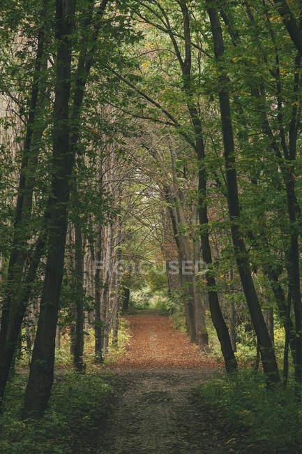 Bulgaria, Sofia, West Park, autumnal path in the park — Stock Photo