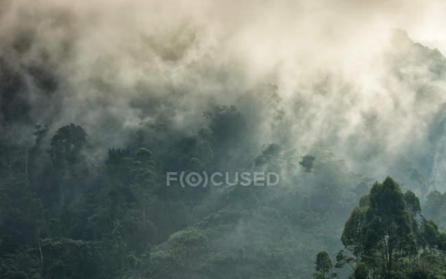 Уганда, Бвінді Національний парк, Бвінді непрохідні ліси — стокове фото