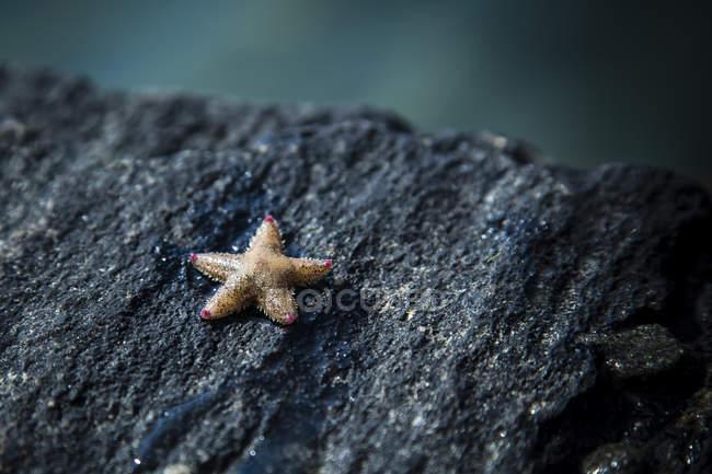 Étoile de mer sur la roche sur fond flou — Photo de stock