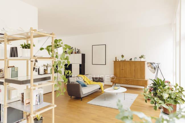 Гостиная и полка с растениями в современном доме — стоковое фото