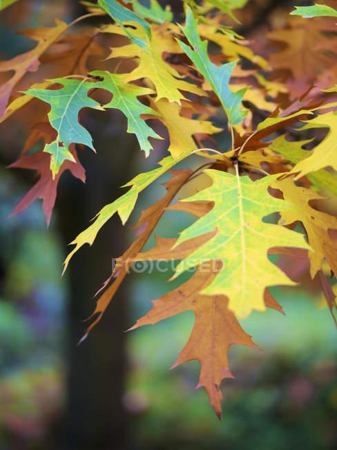 Germany, Hesse, Kronberg, autum leaves — Stock Photo