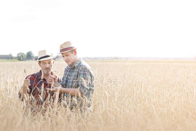 Zwei Bauern Korn im Feld prüfen — Stockfoto